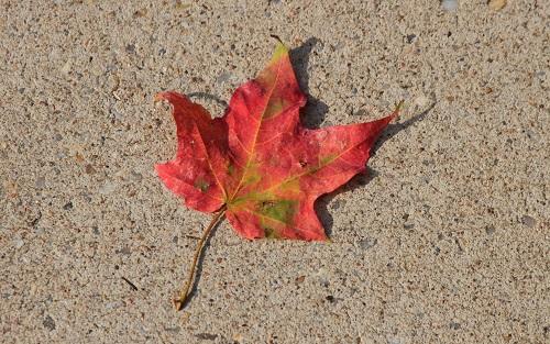 【每日一问】办理加拿大移民体检的流程及注意事项有哪些?
