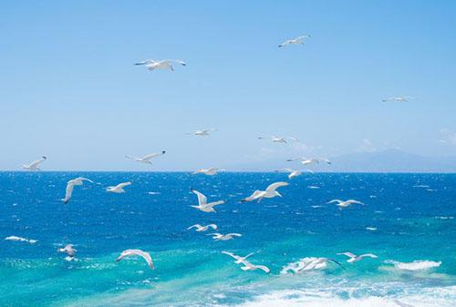 为什么要选择马耳他移民?
